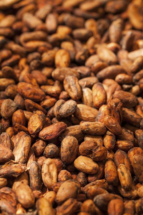 Kakaobohnen, trocknend in der Sonne stockbild