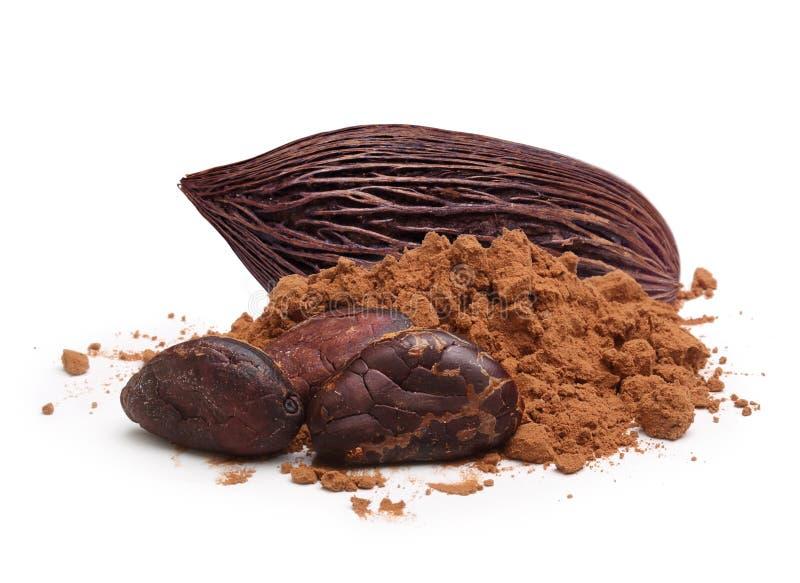 Kakaobohnen und -pulver lokalisiert lizenzfreie stockfotos