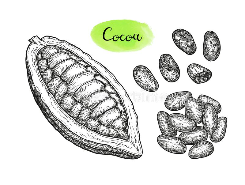 Kakaofärgpulver skissar stock illustrationer