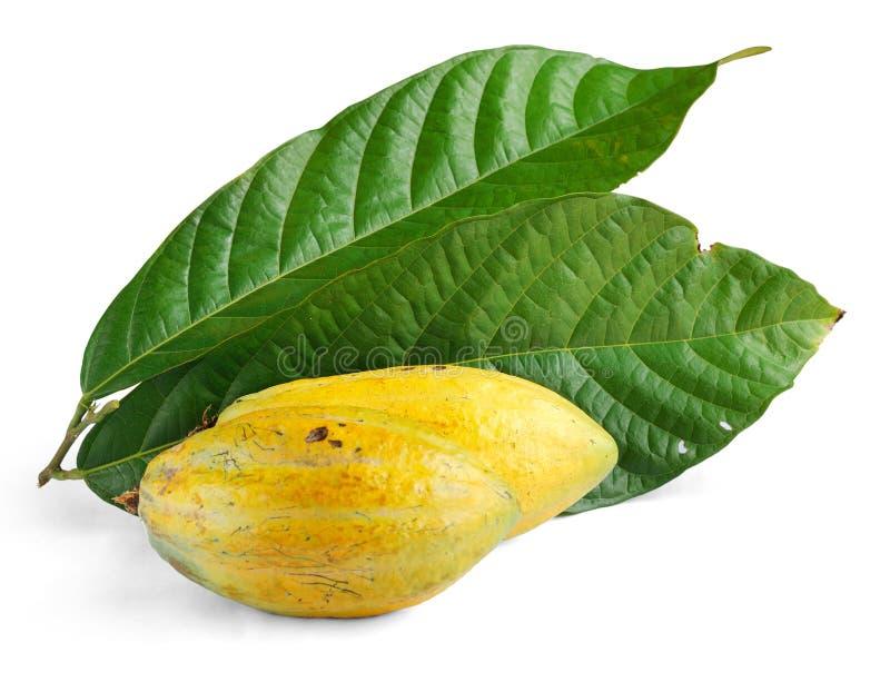 Kakaofrüchte mit Blatt lizenzfreies stockfoto