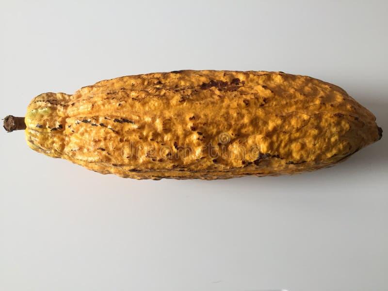 Kakaofrucht stockbilder
