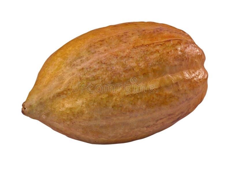 kakaofrukt arkivbilder