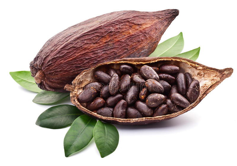 Kakaohülse stockbild