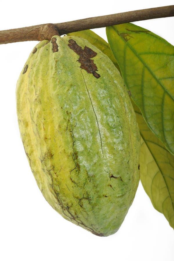 Kakaohülsen lizenzfreie stockfotos