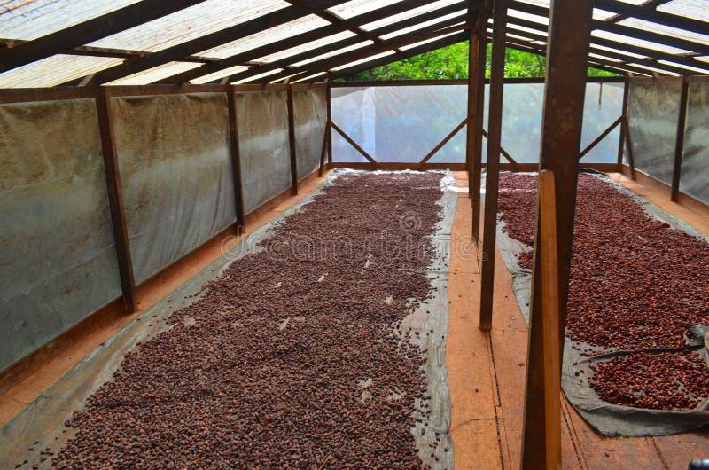 Kakaolantgård royaltyfri fotografi