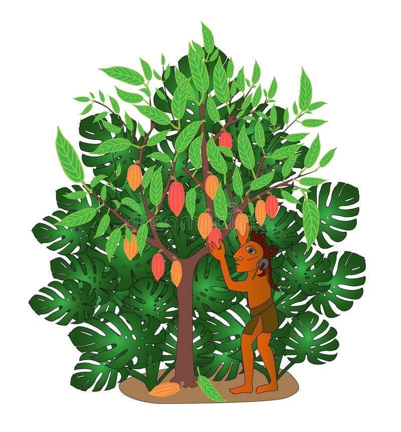 kakaotree vektor illustrationer
