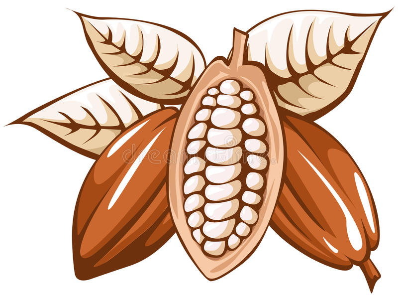 Kakaowa fasola royalty ilustracja