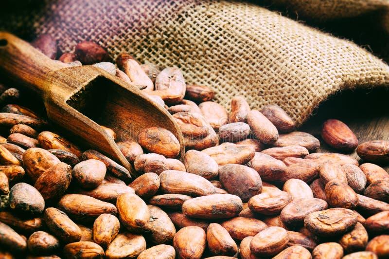 Kakaowe fasole fotografia stock