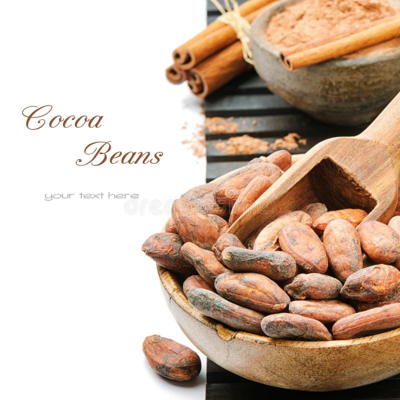 Kakaowe fasole i proszek zdjęcie stock