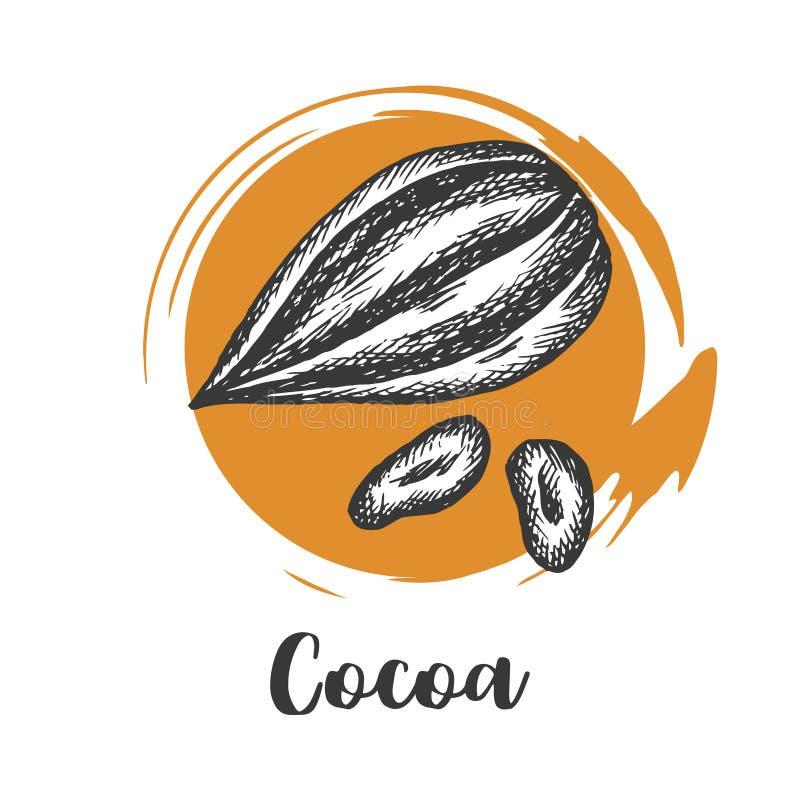 Kakaowej fasoli rysujący nakreślenie Czekoladowy projekt Czekoladowe fasole ptaka rocznik ?liczny ilustracyjny ustalony ilustracja wektor