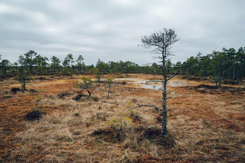 Kakerdaja市分在早期的春天之前,爱沙尼亚 库存照片