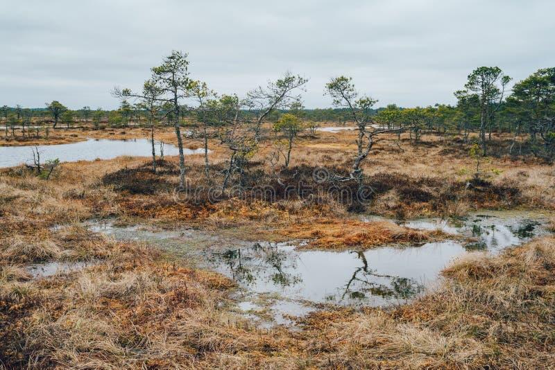 Kakerdaja myr vid tidig vår, Estland fotografering för bildbyråer