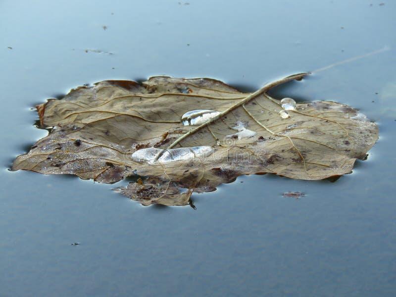 Kaki kleuren droog blad die in water drijven Achtergrond voor een uitnodigingskaart of een gelukwens royalty-vrije stock foto