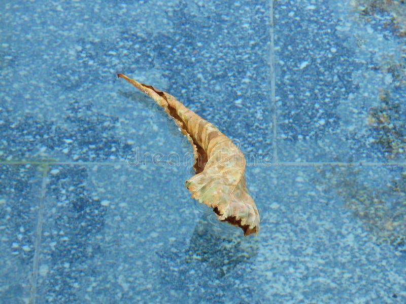Kaki oker droog blad die in water drijven Achtergrond voor een uitnodigingskaart of een gelukwens stock afbeelding