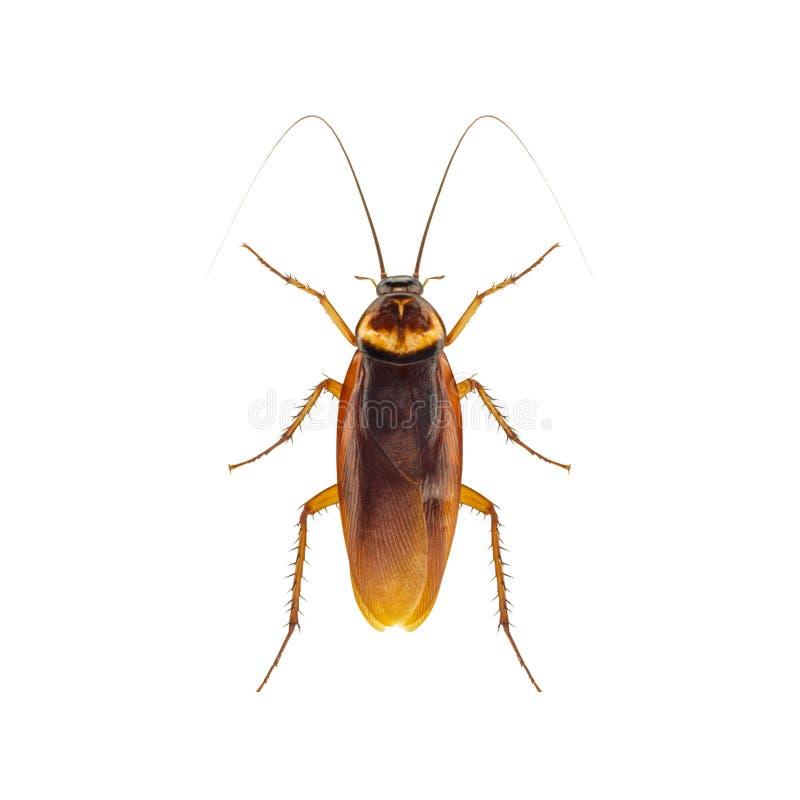 kakkerlak royalty-vrije stock afbeeldingen