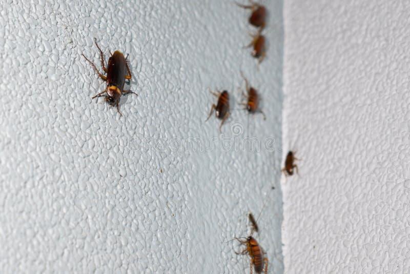 Kakkerlak op de steenmuur royalty-vrije stock foto