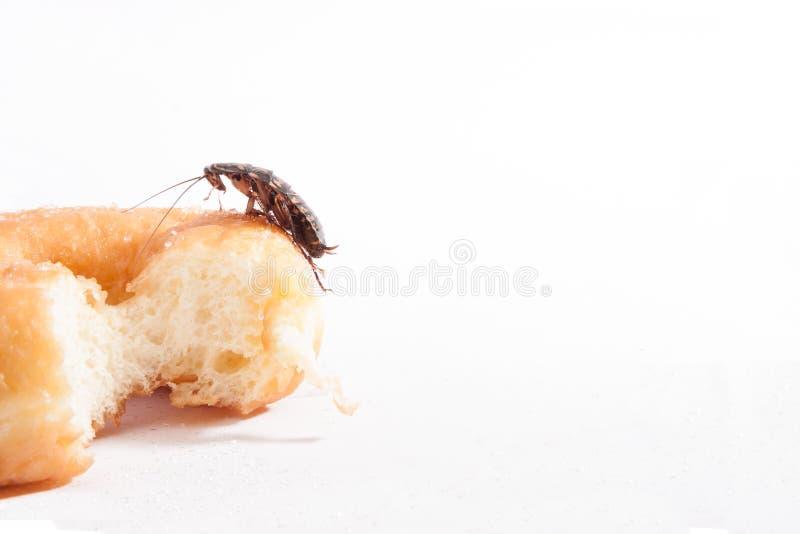 Kakkerlak op doughnut op witte achtergrond stock foto's