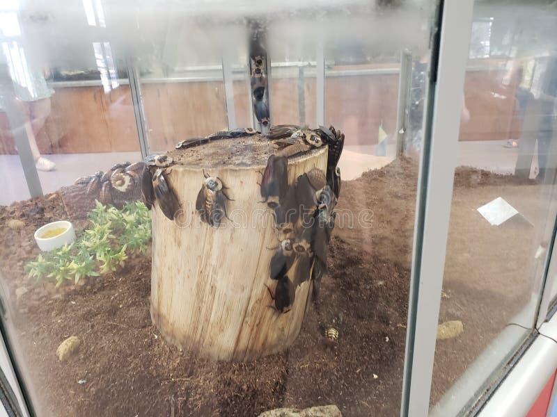 kakkerlakken stock foto's
