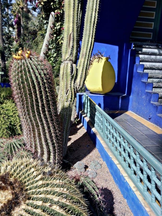 Kakteen im Garten stockfotografie