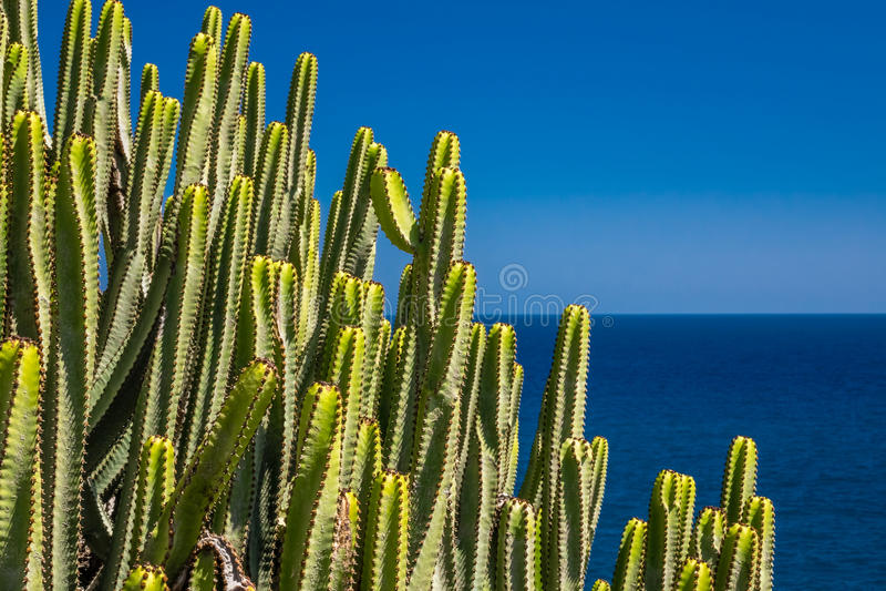 Kakteen von Gran Canaria stockbild