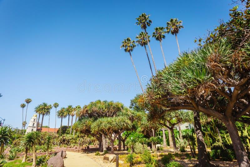 Kaktuns parkerar på beverly trädgårdar arkivfoto