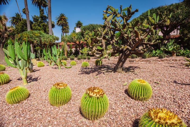 Kaktuns parkerar p? beverly som tr?dg?rdar parkerar royaltyfri bild