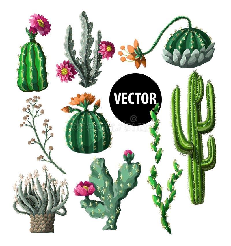 Kakturs med blommor som isoleras på en vit bakgrund också vektor för coreldrawillustration royaltyfri illustrationer