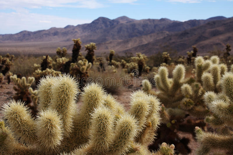 kaktusöken royaltyfria bilder