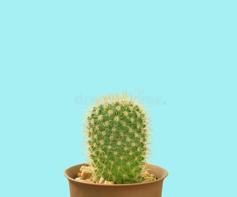 Kaktus ökenväxt royaltyfria bilder