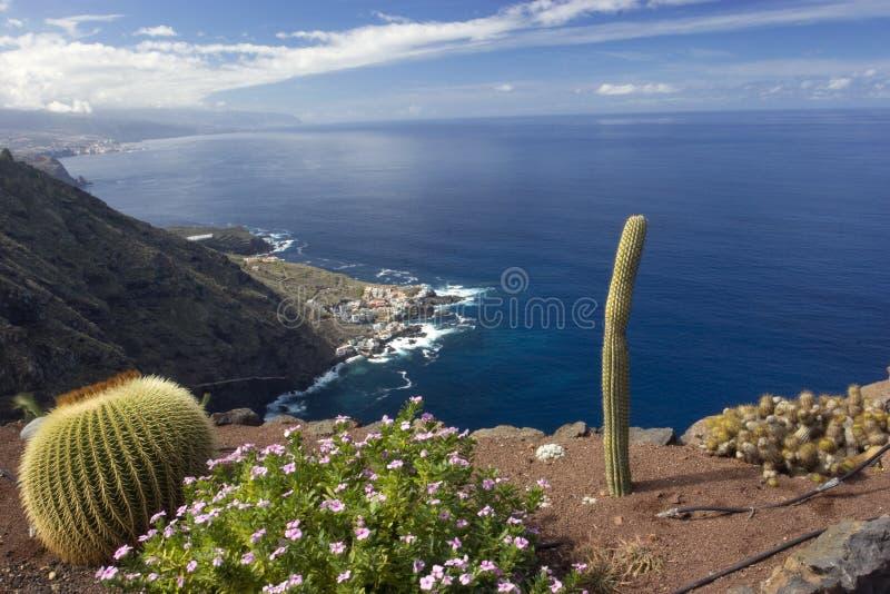 kaktus över havet fotografering för bildbyråer
