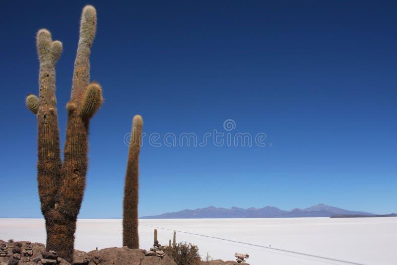 Kaktus über der Straße durch Salar von Uynui stockbild