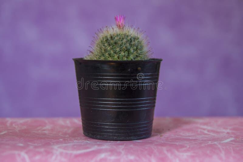 Kaktus 14 royaltyfria bilder