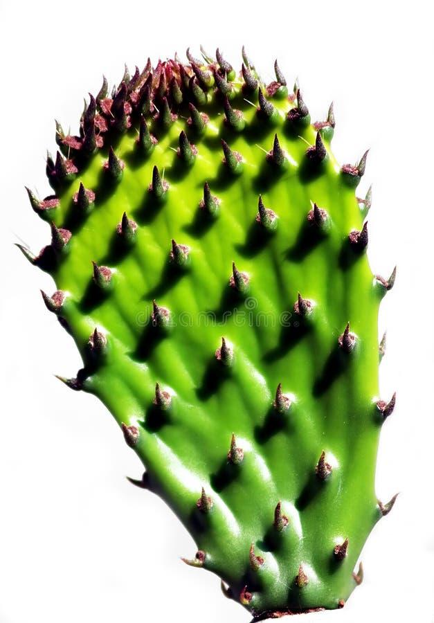 Download Kaktus obraz stock. Obraz złożonej z naturalny, natura - 139163
