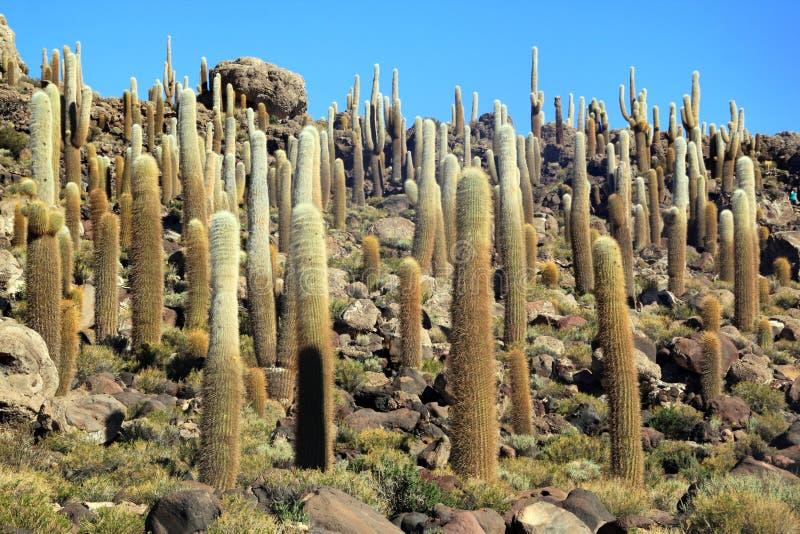 kaktus fotografering för bildbyråer