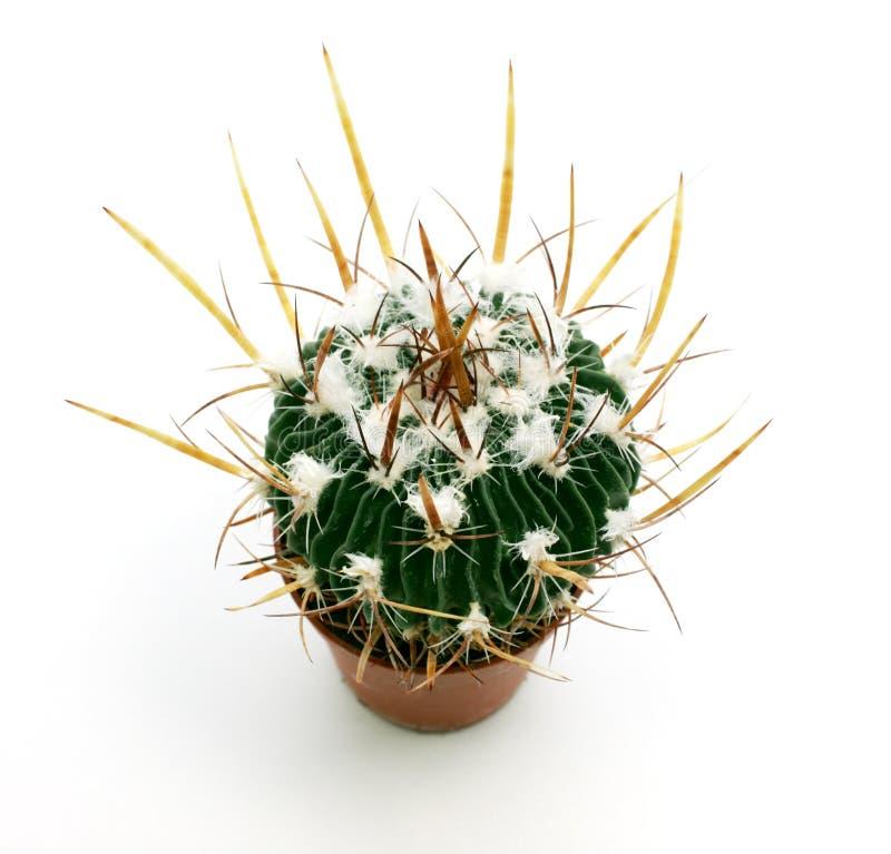 Download Kaktus arkivfoto. Bild av closeup, snitt, green, objekt - 19776196