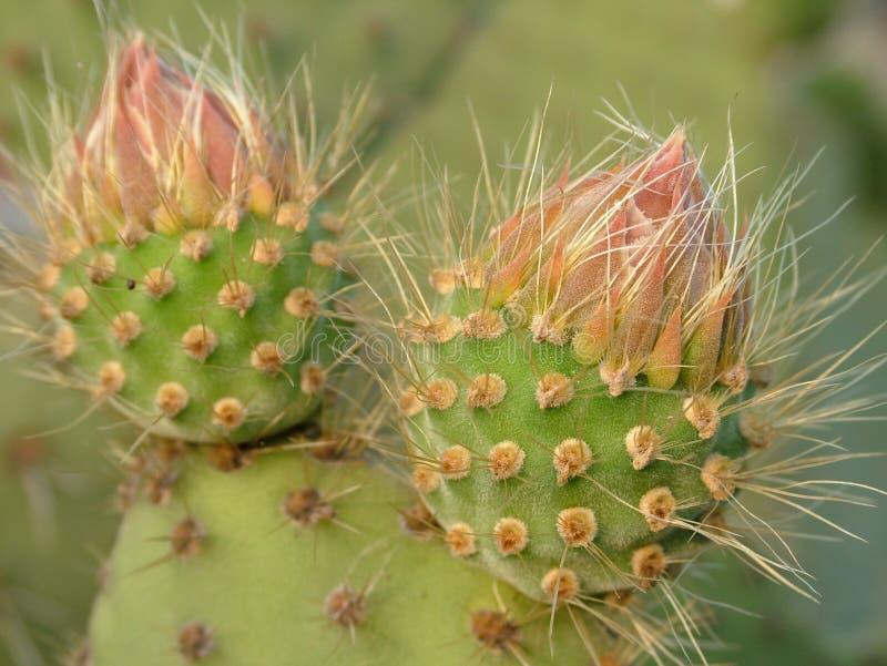 Download Kaktus arkivfoto. Bild av vitt, landskap, visare, vegetation - 278076