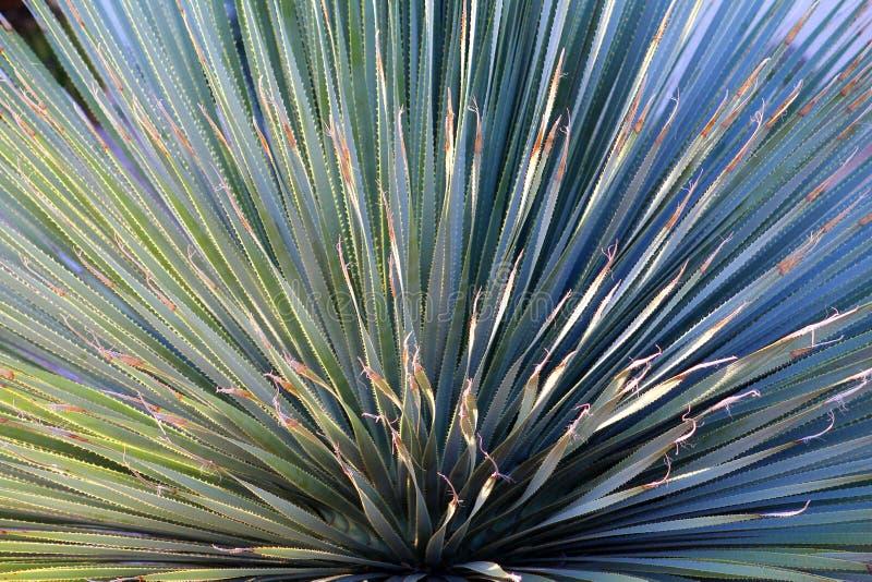 kaktus royaltyfri fotografi