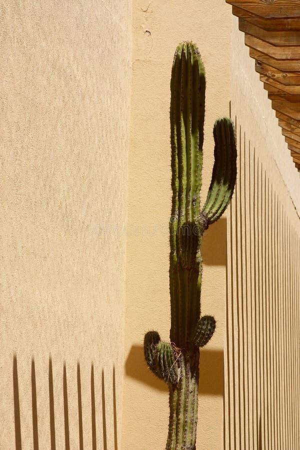 kaktus zdjęcia stock