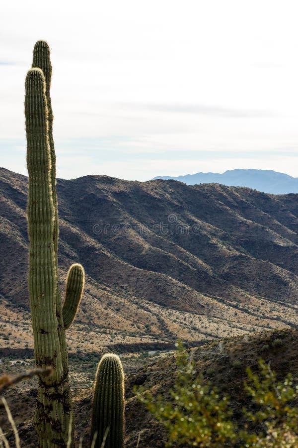 kaktus 2 royaltyfri bild