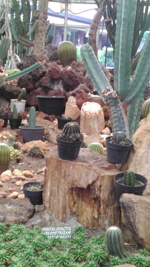 Kaktus fotografía de archivo libre de regalías