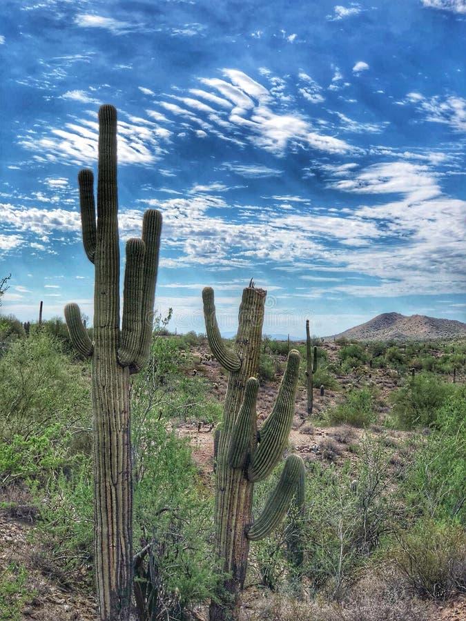 Kaktus-Arizona-Landschaftwanderndes az im Freien lizenzfreie stockfotos