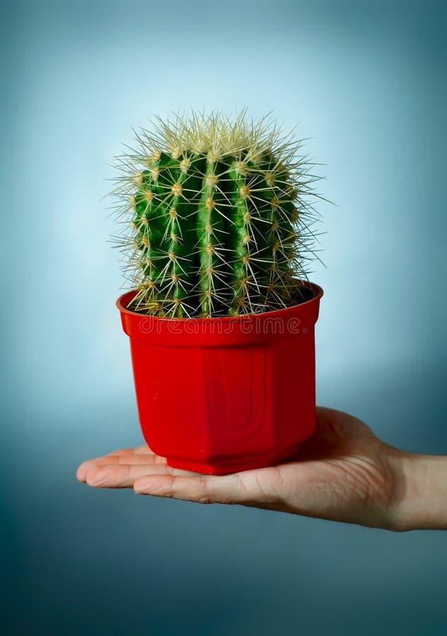 Kaktus auf der Hand lizenzfreie stockbilder