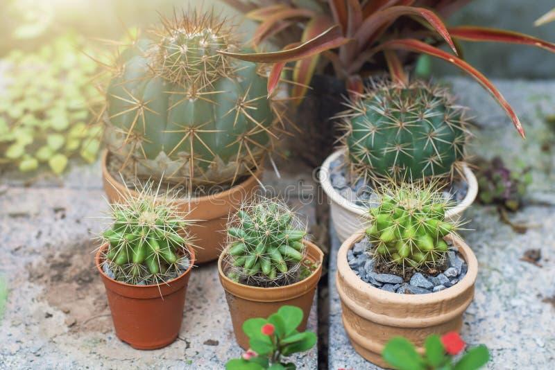 Kaktus auf Töpfen stockfotografie