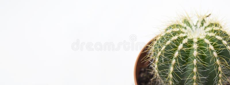 Kaktus auf weißem Hintergrund Anlagen des umweltgerechten Hauses im Blumentopf Horizontales Foto stockfotos