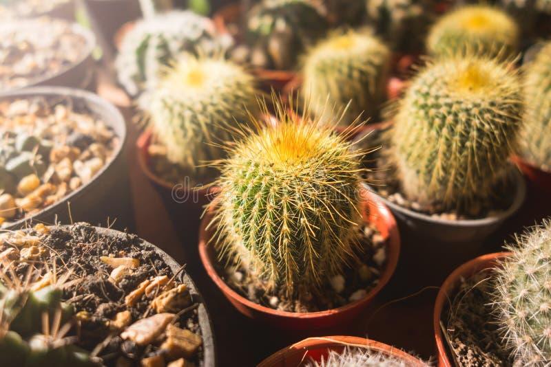 Kaktus blüht in den Töpfen, bunte Blumentöpfe, Blumenshop, r lizenzfreie stockfotos