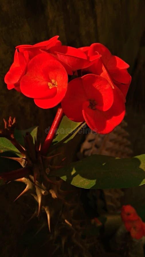 Kaktus-Blume 2 stockfotos