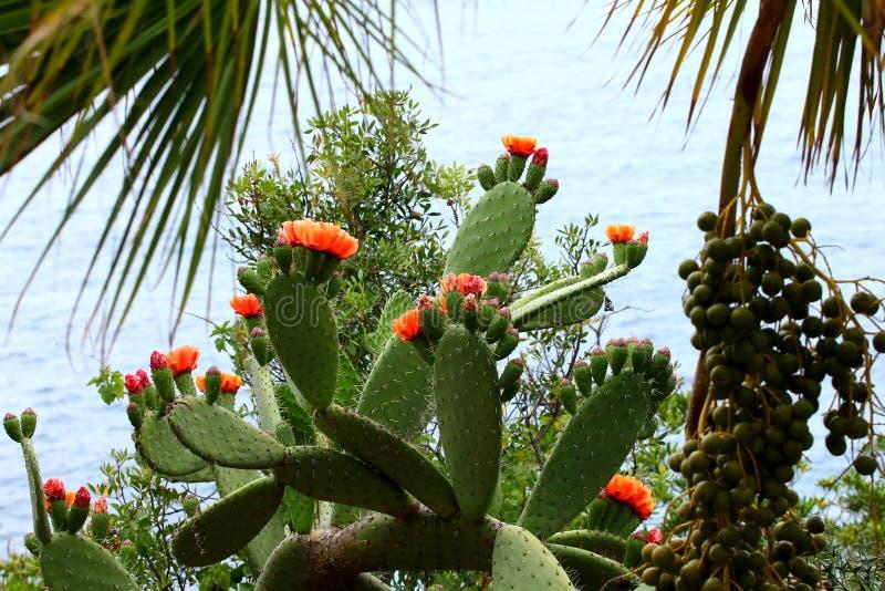 kaktus clumy kwitnienia kwiaty wzrostu jak nowe strony małe obrazy royalty free