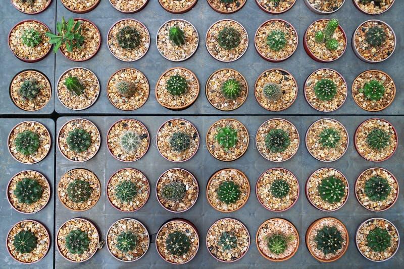 Kaktus in den Potenziometern stockfoto