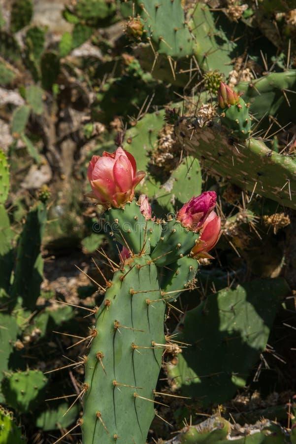 Kaktus in der Blume lizenzfreies stockfoto