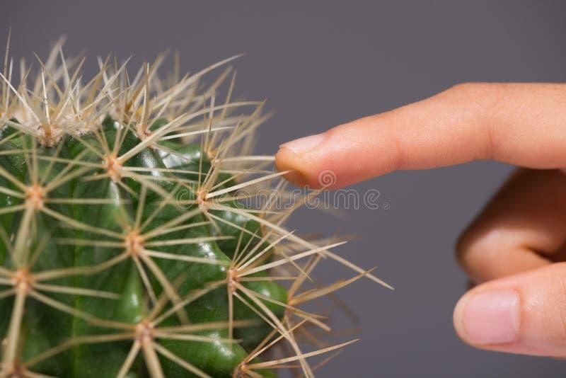 kaktus dotykania obrazy royalty free